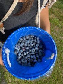 BLUEBERRY FARMIMG_2703